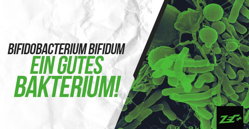 Bifidobacterium Bifidum – ein GUTES Bakterium!