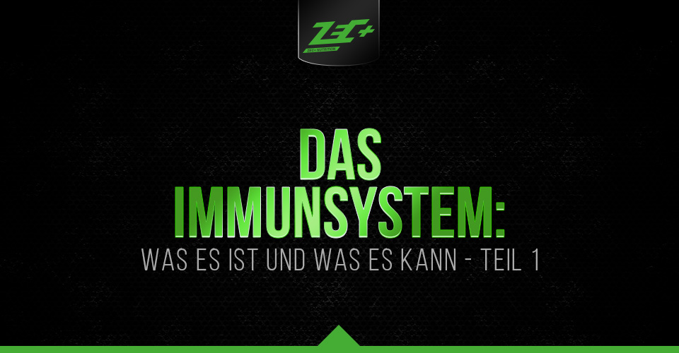 Das Immunsystem: was es ist und was es kann – Teil 1