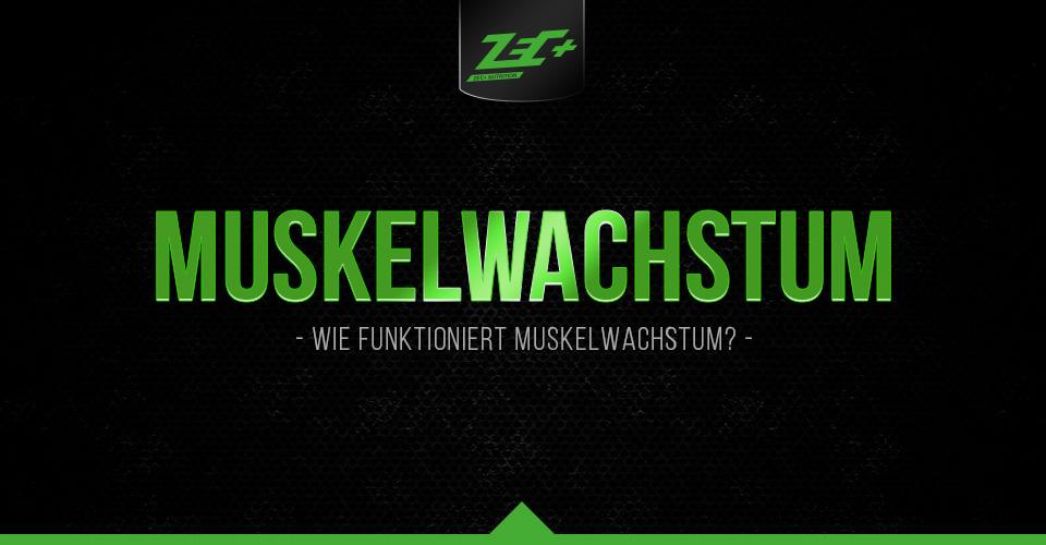 Wie funktioniert Muskelwachstum? Teil 1