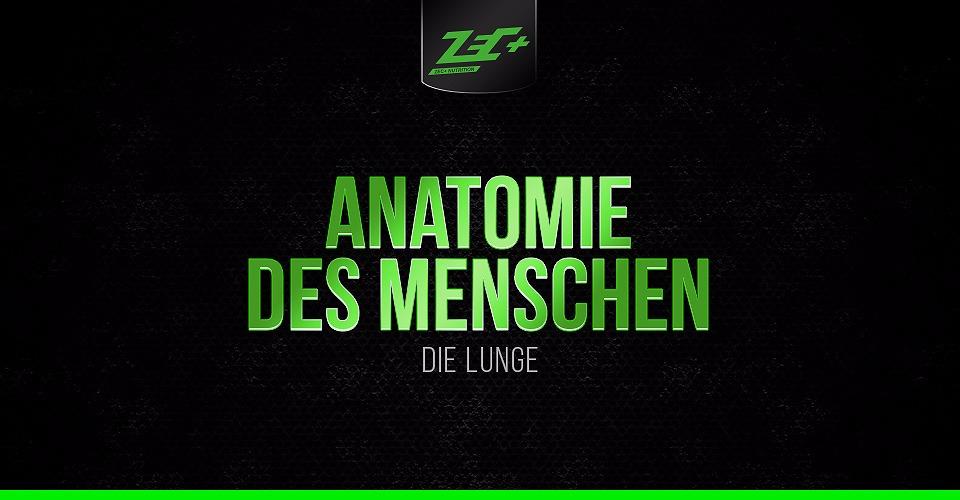 Anatomie des Menschen: Die Lunge | Zec+
