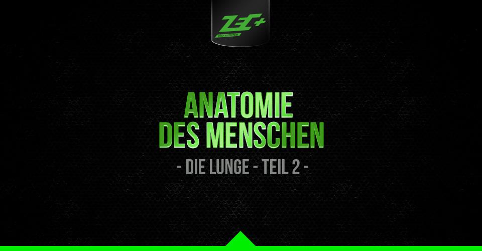 Anatomie des Menschen: Die Lunge - Teil 2 | Zec+