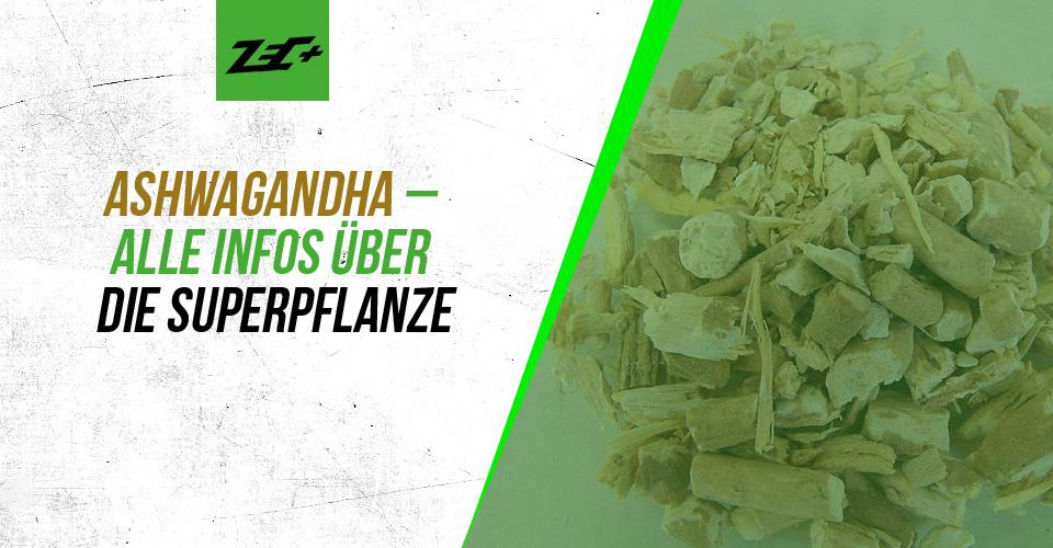 Ashwagandha – Alle Infos über die Superpflanze